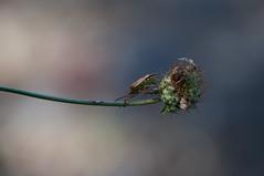 JRLD-20110617_12755 (XoseMon) Tags: insectos spain zaragoza animales aragón chinche aragn