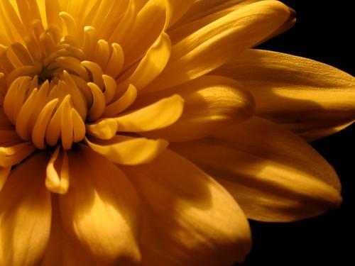 yellowlicious