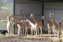 Longleat Safari Park #7