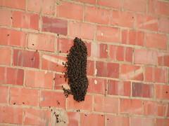 Eixam d'abelles