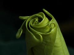 flower bud (bertdennisonphotography) Tags: life california black flower macro green nature leaves canon leaf still twist sierra curl bud eastern inyo