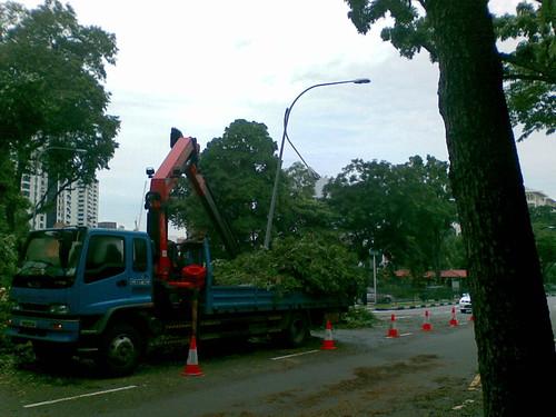 Fallen tree on Stevens Rd