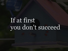 Try try again (James Jordan) Tags: bird dedication video funny humorous nest humor jazz birdhouse again twig wren try build videos s700 determination commitment persistence succeed sucess vids clipcity