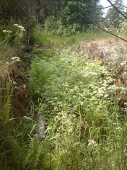 Overgrown WW1 trench (hugovk) Tags: camera summer abandoned overgrown june digital suomi finland geotagged helsinki war wwi ab trench worldwarone ww1 helsingfors fortification hvk russian 1915 2008 fortress remains base firstworldwar sveaborg worldwar1 kes asema uusimaa krepost nyland keskuu xxxv mkkyl southernfinland position3 hugovk geo:country=finland xxxv3 exif:ISO_Speed=50 tukikohta krepostsveaborg fortressofsveaborg maalinnoitus basexxxv tukikohtaxxxv imag4110 geo:lat=60229511 geo:lon=24858229 pivlisenpuisto reimarlia knala tukikohtaxxxv3 basexxxv3 asema3 071kmtoknalainsouthernfinlandfinland exif:Focal_Length=77mm digitalcamerads5mp exif:Flash=autodidnotfire exif:Aperture=30 exif:Exposure=1145 exif:Exposure_Bias=0 uudenmaanmaakunta geo:county=uudenmaanmaakunta geo:region=southernfinland ds5mp camera:Model=ds5mp camera:Make=digitalcamera geo:locality=mkkyl meta:exif=1364132190 overgrownww1trench