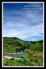 Sg Palas Boh Tea (lOtkOt) Tags: travel green malaysia cameronhighland bohtea sgpalas