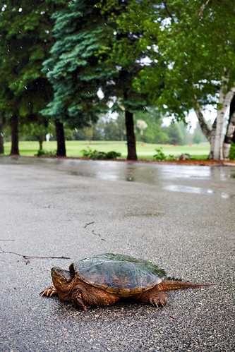 turtle in parking lot