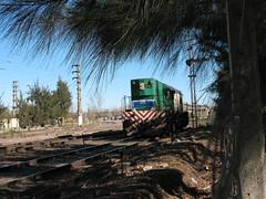 Tras las casuarinas (kilómetro9) Tags: railroad argentina train railway railways ferrocarril cañuelas casuarina emd gr12