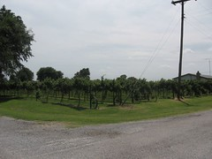 Carrier, OK  Vineyard