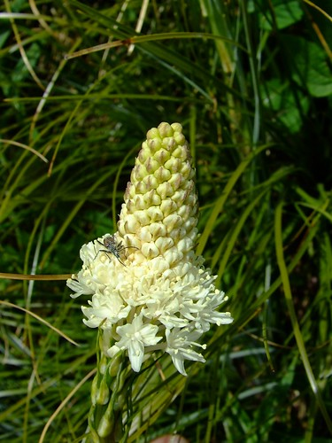 bear grass with cool bug