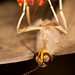 Moth / Mariposa