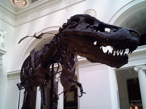 Close up of Sue the T-Rex