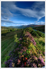 Wicklow Mountains in August (Janek Kloss) Tags: road ireland dublin plant mountains color photo nikon colours fotograf photos blossom heather military violet vivid sigma august tourist irland eire fotka co bloom flowering blossoming fotografia mapping 2008 wicklow 1020 tone attraction zdjecia irlanda mapped ierland thrive j23  zdjecie fotki irlandia   hwdp d80  effloresce nothdr mywinners lirlande fotosy    moli516