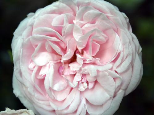 Souviner de la Mal Masion Rose