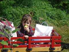 Testing out the apples in her wagon