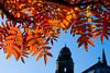 Autumn Leaves (Surely Not) Tags: autumn red leaves 50mm scotland nikon edinburgh d80 yourphototips