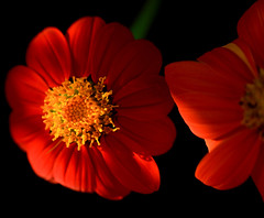2 Orange Flowers