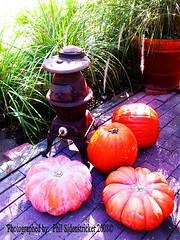 Pumpkins (phil_sidenstricker) Tags: plants brick nature landscape pumpkins naturallight copper outdoorheater donotcopy valleyofthesunphoenixmetro reflectyourworld upcoming:event=981998 southmountainfarmphoenixazusa