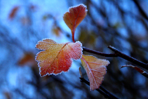First frost 2