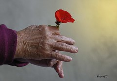 Con le mani (sirVictor59) Tags: flower hands bravo nikond70 mani fiore colori soe golddragon abigfave infinestyle colourartaward goldstaraward sirvictor59 goldenheartaward