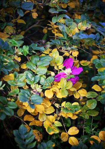 Autumn Colours 08 -6