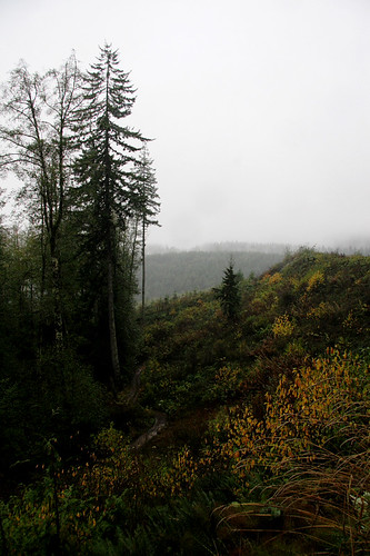 clear forest lands essay Clear-cutting a forest is removing all the trees and vegetation, regardless of species, leaving the land completely bare because nothing is left on the land, scientists have no idea how long it takes the forest to recover.
