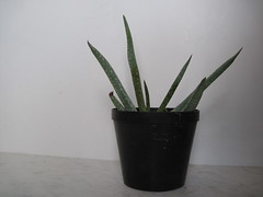 IMG_0165 (Plantules) Tags: