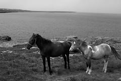 Les iles d'Aran (batswirl) Tags: ireland sea sky bw horse cloud mer white black stone cheval pierre ruin nb ruine ciel nuages inishmor irelande