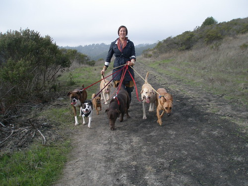 Kristen shows off the seven dogs we walked together in Tilden today.