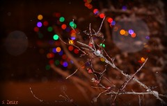 Christmas bokeh - Photoshopping by God! (Sheree (Here intermittently)) Tags: photoshop canon photography snowflakes edmonton bokeh photoshopped christmaslights alberta happyholidays christmastime photoshopping lenses instructor dirtylens redberries tistheseason seasonsgreetings happythoughts cameralens beautifulshot godsartwork challengeyouwinner flickrenvy shereezielke albertaphotographer edmontonphotographer treebrancheswithbokehlights irresitstiblebeauty freedomehawkawards visualsbysheree digitalcameralessonsinedmonton marthasvine copyrightshereezielke