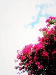 sky & flower