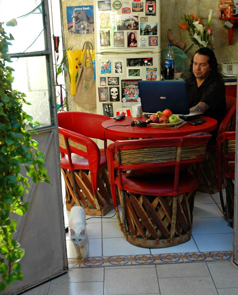 Eco-Guide Ariel communicating via laptop computer, white cat, kitchen, his house, Guadalajara, Jalisco, Mexico