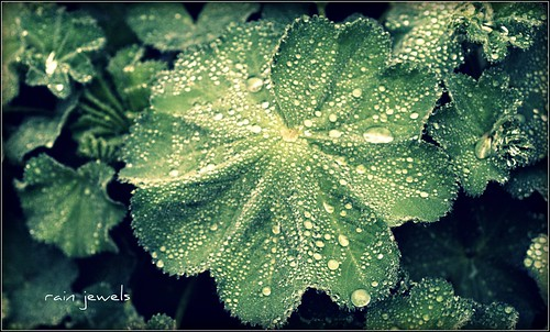 Rain_Jewels_framed