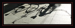 I'll follow your shadow (intempestiva) Tags: mars flower primavera bike torino march shadows blumen ombre bici fiori turin printemps marzo fahrrad vlo springtime bicicletta fruehling maerz floeur fz8