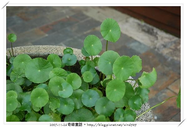 DSC_9864和興國小_校園水生植物