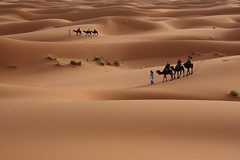 The Beauty of the Desert by
