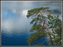 Vierwaldstttersee CH (ticinoinfoto) Tags: trees lake plant water alberi reflections lago switzerland see flora wasser suisse swiss svizzera acqua piante riflessi baum naturesfinest landscapesdreams salveanatureza