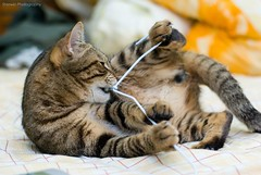 get rid of it! (Sherwin_andante) Tags: cat 2008 toro 貓 200805 fa50 k10d 龍二