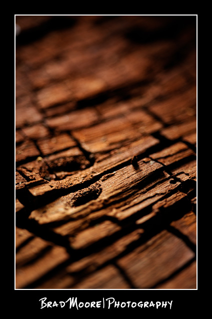 Redwoods_Bark