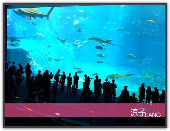 水族館15