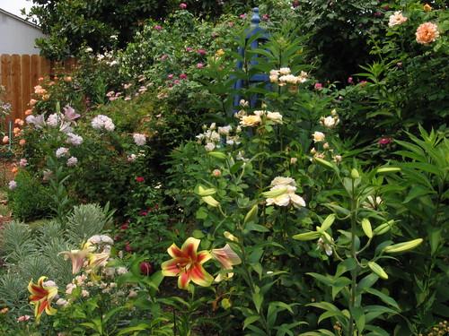 garden shots July08 011
