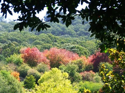 Australia-fallcolors-loftia