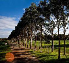 Margaret River, Australia (C) 2008