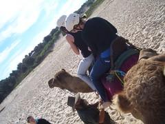 CIMG0320 (Queenbean79) Tags: beach camels portmacquarie