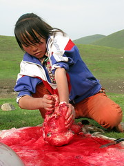 Butchering a sheep Tibetan style near Erbou, Qinghai Province, China