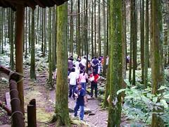 馬武督綠光森林