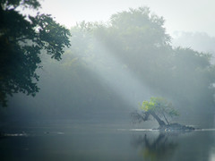 Island in the stream (James Jordan) Tags: morning light sunlight mist fog wow river landscape island stream ray dream 100v10f foxriver s700 supershot dundeeillinois abigfave aplusphoto ysplix betterthangood