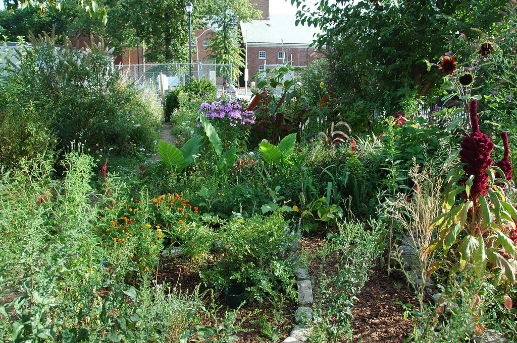 Campus Road Garden (photo by Flatbush Gardener)