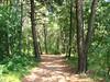 tuffo nel bosco