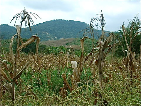 Ecuador-real-estate-corn