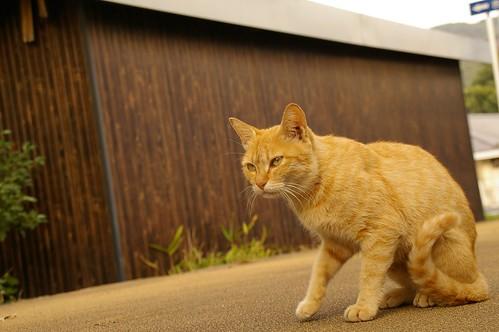 Stray Cat #6